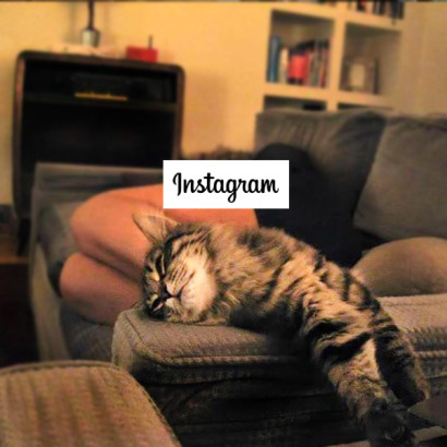 Gatto Morto su Instagram